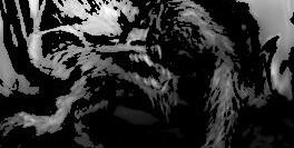 Soodenwolf – Auf dem Vormarsch
